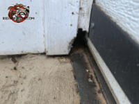 Rat hole gnawed through the vertical garage door trim and into the garage of a house in Gainesville Georgia