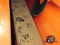 Rat footprints in the dust on a beam in an attic in Hawkinsville, Georgia