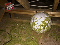 Big styrofoam ball used to have green felt on it before the roof rats gnawed it off