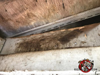 Prominent dark stains on the framing where roof rats were getting into the roof of a house in Valdosta Georgia