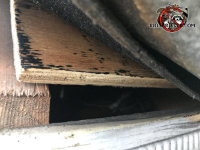 Inch and a half gap between the roof sheathing and fascia allowed roof rats into the attic of a house in Red Bank Tennessee