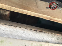 One inch gap at the edge of the roof sheathing allowed roof rats into the attic of a house in Suwanee Georgia