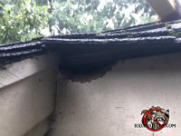 Rat gnaw hole through the roof trim near the rain gutter of a house in Americus Georgia