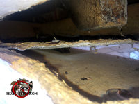 Roof rat gnawed a hole in the fascia of a house in Birmingham Alabama