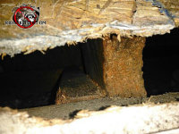 Roof rat chew hole between the roof sheathing and fascia of a house in Harrison Tennessee