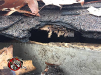 Roof rats gnawed a hole in the wooden fascia and sheathingof a house in Macon Georgia