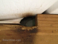 Rat rub marks on a rafter at a Birmingham, Alabama rat extermination job