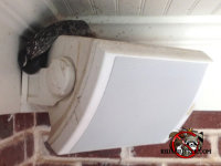 Snake behind an exterior speaker on the porch of a Macon, Georgia home