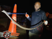 Man holding a snake removed from a barn in Roberta Georgia in front of him with the head in a snare and the tail in his other hand.