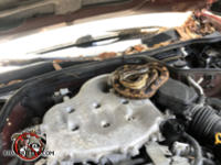 The hood of an old car is opened and there is a rat snake coiled up on top of the engine.