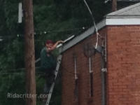 Man on a ladder sealing squirrels out of a commercial building in Bessemer, Alabama