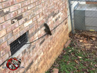 Squirrel climbing down a brick wall