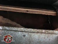 Two inch gap under the roof sheathing allowed squirrels into the attic of a house in Birmingham Alabama