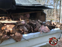 Squirrels gnawed a baseball sized through the wooden roof fascia at a house in Birmingham Alabama behind a rain gutter clogged with leaves