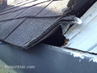 Squirrel entry hole and damage to the edge of a roof in Birmingham, AL