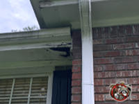 The corner of the soffit panel is badly water damaged and allowed squirrels into the soffit of a house in Cordele Georgia