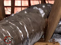 Squirrels chewed through the insulation around a flexible heating duct in the attic of a house in Macon