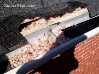 Squirrel damage to the roof of a home in Hoover, Alabama