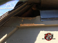 Squirrel gnaw damage to the wooden trim under the peak of the roof of a house in Birmingham Alabama