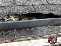 Squirrels gnawed a gap of about two inches along a roughly twelve inch length of shingles on the edge of the roof of a house in Birmingham Alabama.