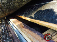 Gap under shingles on edge of roof let squirrels into an attic in Macon