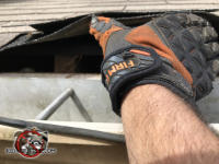 Gloved hand lifting the shingle on the edge of the roof of a house in Albany Georgia reveals a squirrel entry gap between the sheathing and the fascia