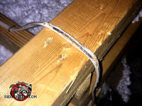 Electrical wires in the attic of a house in Valdosta Alabama that were gnawed by squirrels, some through to the bare copper