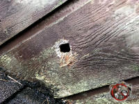 Knot hole in the wooden siding that squirrels used to get into a house in Albany Georgia.