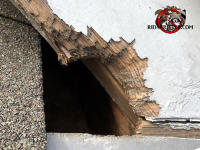 Squirrel chewed a hole through the wooden trim of the roof of a house in Barnesville Georgia
