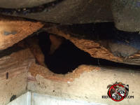 Squirrel hole in the roof of a house in Warner-Robin, Georgia