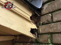Two squirrel holes gnawed into the wooden roof trim of a house in Lakeview Tennessee. The top hole is a dead end but the bottom hole goes through the wood into the soffit.