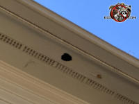 Baseball sized squirrel hole in the soffit panel of a house in Lawrenceville Georgia