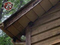 Squirrel chewed out a softball sized hole spanning the soffit and the wooden siding to get into the attic of a house in Macon Georgia