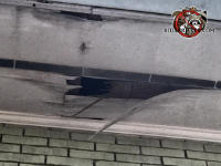 Squirrel chewed a hole through the water damaged soffit panel of a house in Middle Valley Tennessee