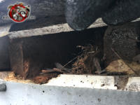 Squirrels gnawed the wooden fascia at the bottom of a two inch gap in the edge of the roof of a house in Signal Mountain Tennessee
