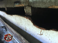 Squirrel holes gnawed through the wooden fascia to make the gap under the roof sheathing big enough for squirrel to get into the attic of a house in Americus