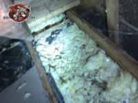 Flattened out insulation contaminated with squirrel urine and feces in the attic of a house in East Brainerd Tennessee