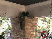 Three young squirrels on top of a brick porch support post