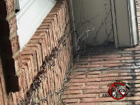 Vines growing on the side of a house served as ladders for squirrels to get in through a hole in the soffit