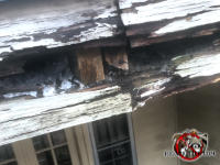 The edge of the roof is heavily water damaged which made it easy for squirrels to get into the attic of a house in Macon Georgia