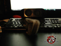 A real squirrel at the keyboard of a computer looking as if it is using the computer to do research
