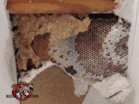 Ceiling sheetrock opened up to reveal yellow jacket nest inside in a Hawkinsvill, Georgia home