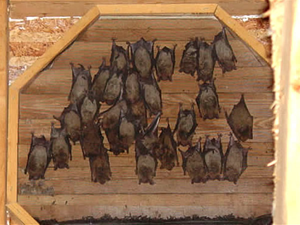 how to stop bats from roosting on my porch