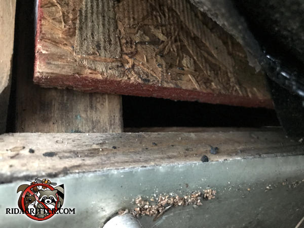 Half inch gap between the roof sheathing and fascia board through which bats got into the attic of a house in Atlanta