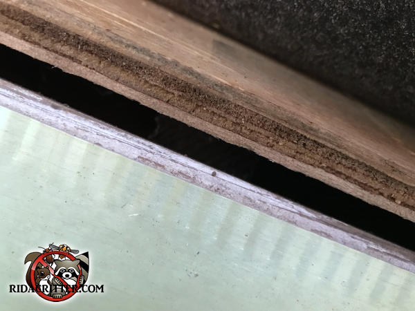 Three eighth inch gap between the roof sheathing and the fascia allowed bats in the attic of a house in East Point Georgia