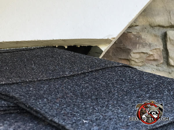 Gap between the shingles and the roof trim allowed bats into the house