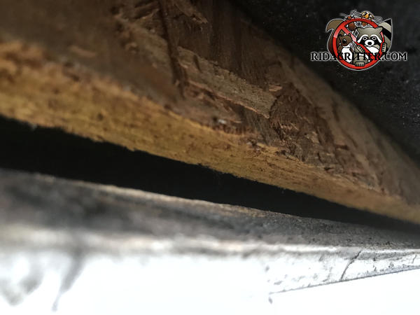 Tapered gap about half an inch at the wide end allowed bats to get into the attic of a house in Atlanta