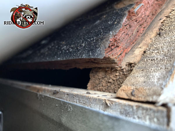 Gap of about half an inch at the edge of the roof sheathing allowed bats into the attic of a house in Hoschton Georgia