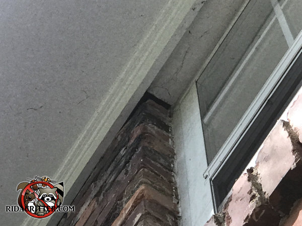 Half inch by three inch gap along one end of a brick by a window allowed bats to get into a house in Smyrna Georgia