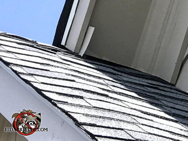 Gap between the soffit panel and the shingles at a roof junction point allowed bats into the attic of a house in Buford Georgia